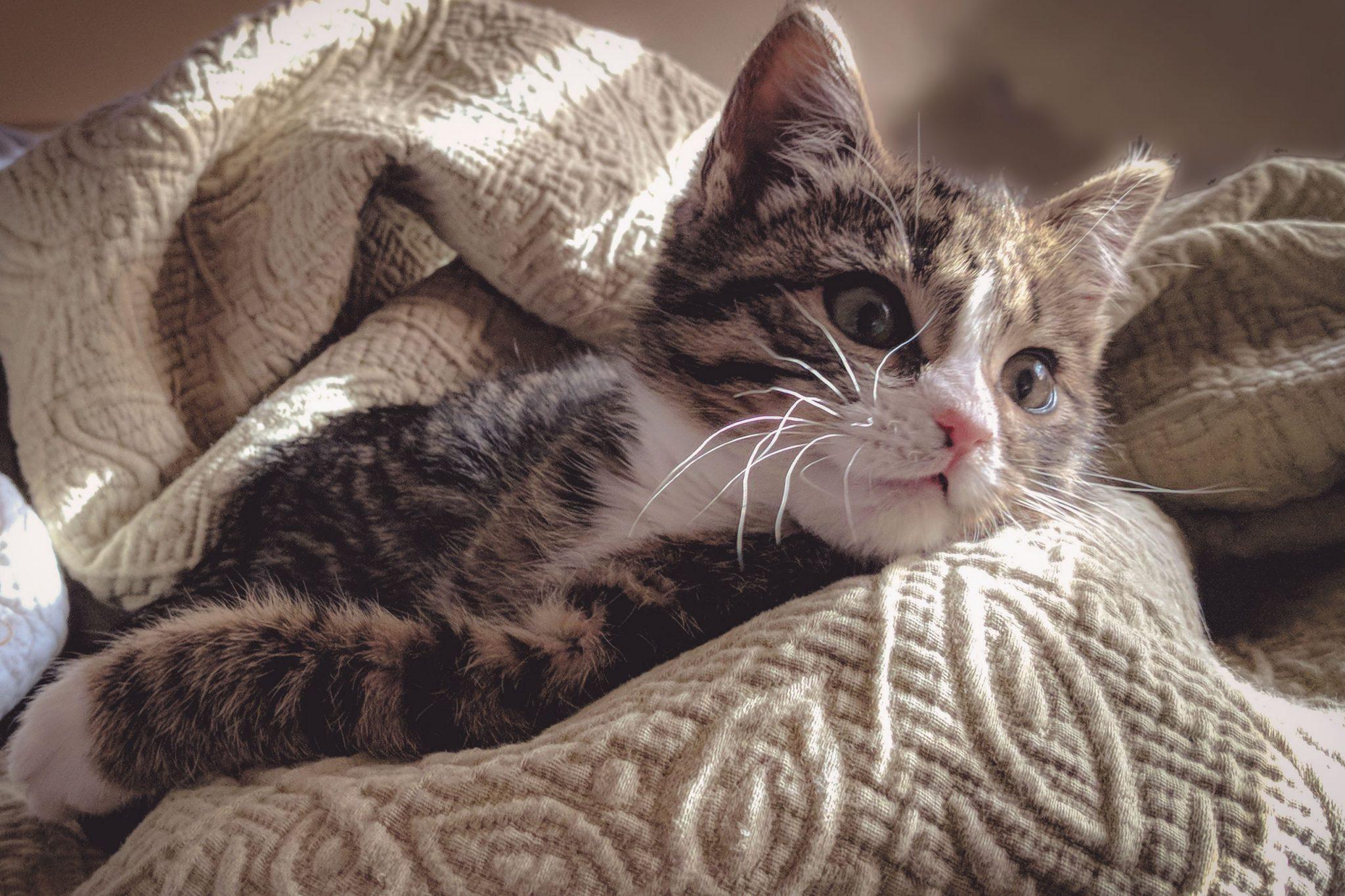 健常猫に対する徐放性レベチラセタムの薬物動態について