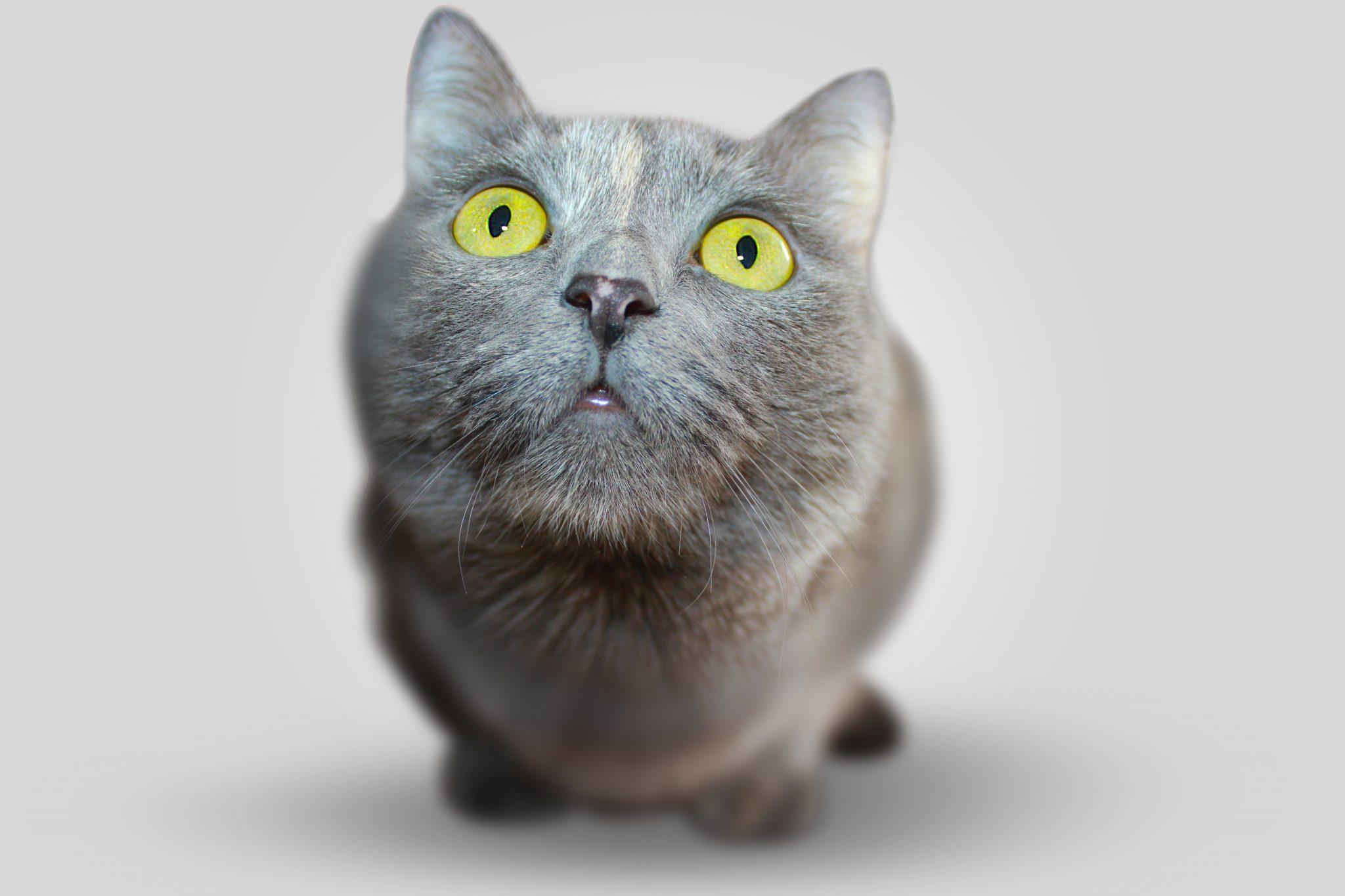 慢性腎臓病の猫に対するリン吸着剤の長期給与は有効か?