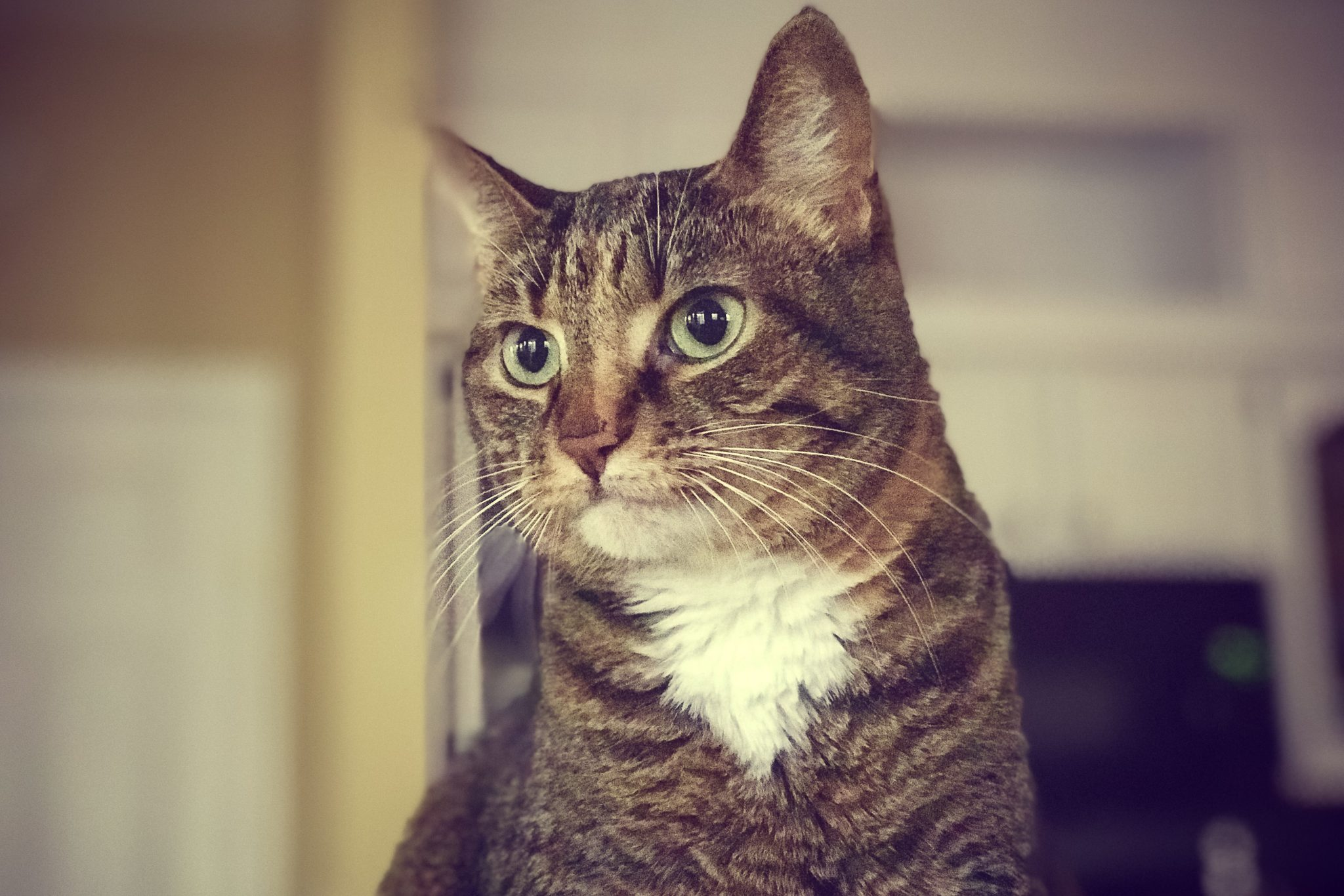 慢性腎臓病の猫にプロトンポンプ阻害薬を使用することは腎臓病の進行につながるのか?