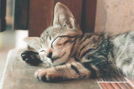 若齢猫に多い発作とは?:病因分類と予後について