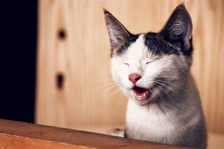 高齢猫の骨関節炎にガバペンチンが有効?