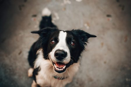 犬の腎機能低下の検出に優れているのはどれ?:Cre, SDMA, シスタチンCの比較