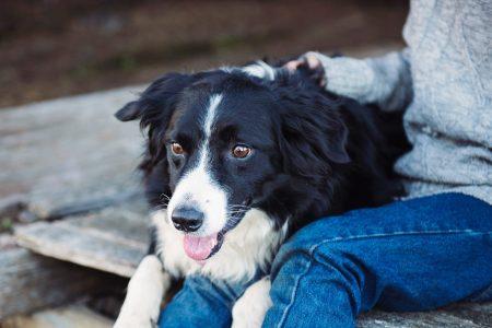 放射線治療を受けた後の犬の飼い主の満足度、QoLの評価は?