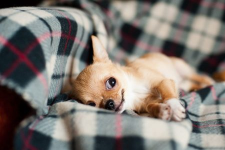 てんかん重責状態の犬にミダゾラムの経鼻投与が有効!?