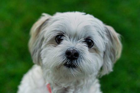 犬の腎機能低下をスクリーニングする際に用いるべきSDMAのカットオフ値は○○?