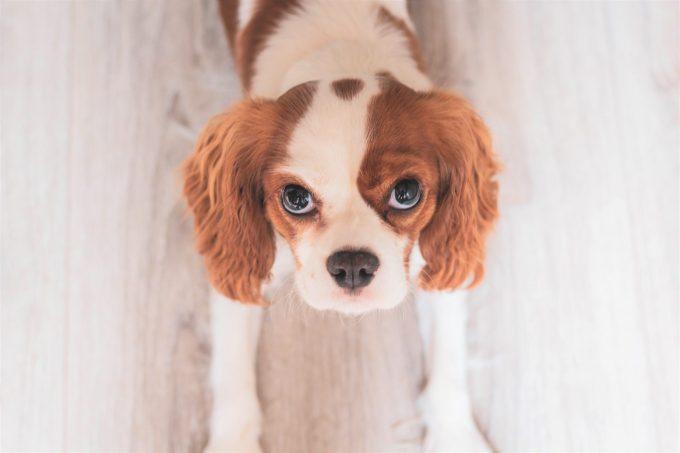 ステージB2のMMVDの犬をレントゲン検査だけで判断する方法とは?