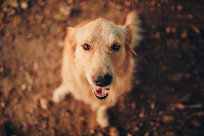 リンパ節転移した低悪性度肥満細胞腫の犬に外科手術に加えて化学療法を実施しても意味はない?