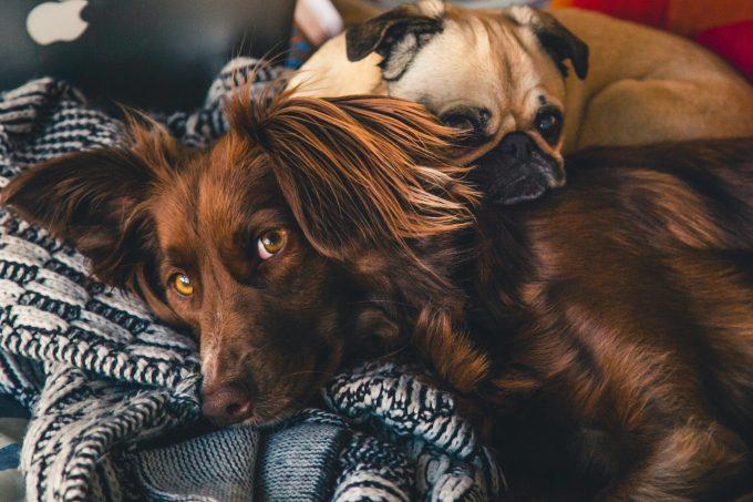 飼い主が自宅で気づく特発性てんかんの前駆症状とは?