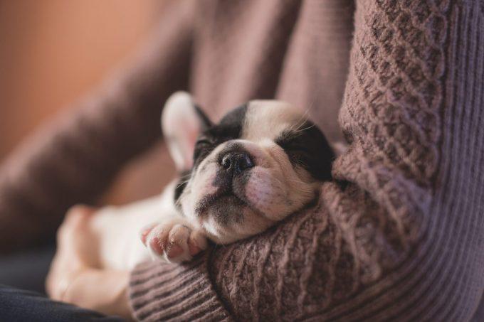 急性腎障害の犬はあわせて○○も評価すべき!?
