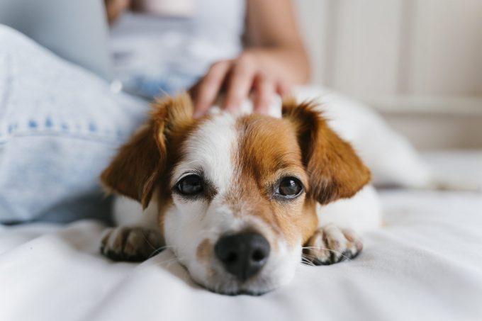 犬のCKDにおける骨ミネラル代謝異常の早期マーカーとしてFGF-23が有用?