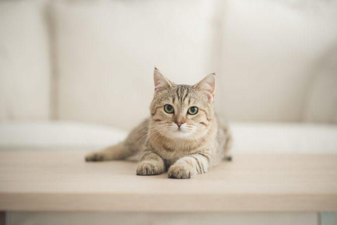 猫の誤嚥性肺炎、気管支肺炎、炎症性気道疾患、それぞれに特徴的な臨床徴候とは?